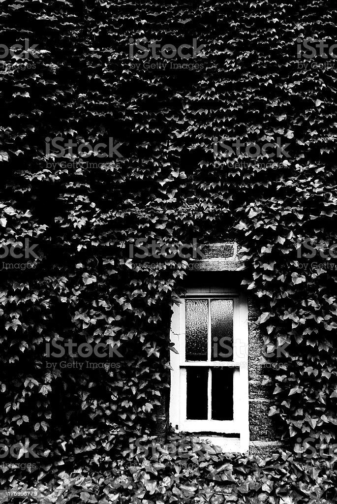 B&W Window surrounded in ivy. royalty-free stock photo