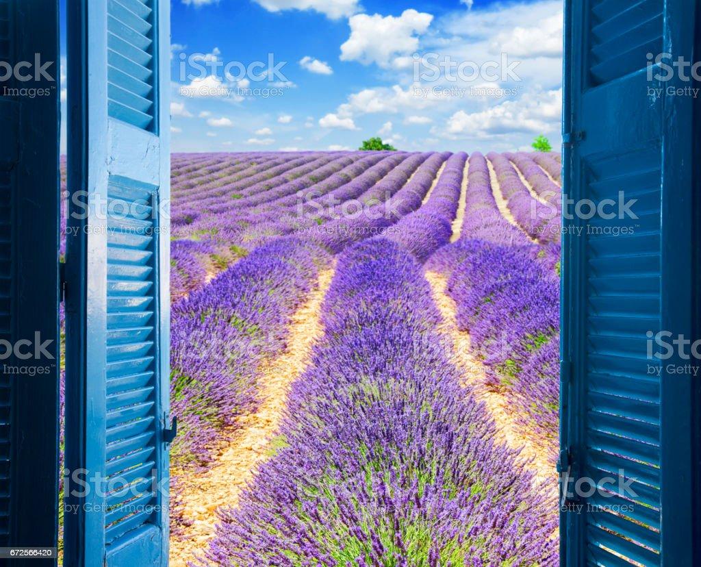 Window to lavender field stock photo