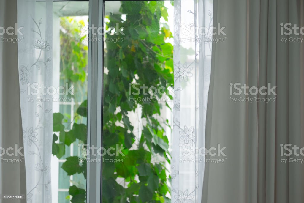 window with curtains and view of trees stock photo