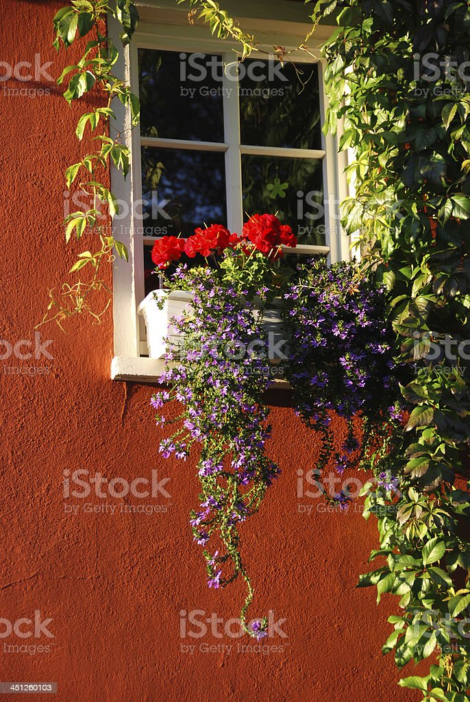 Window with Flower-box stock photo