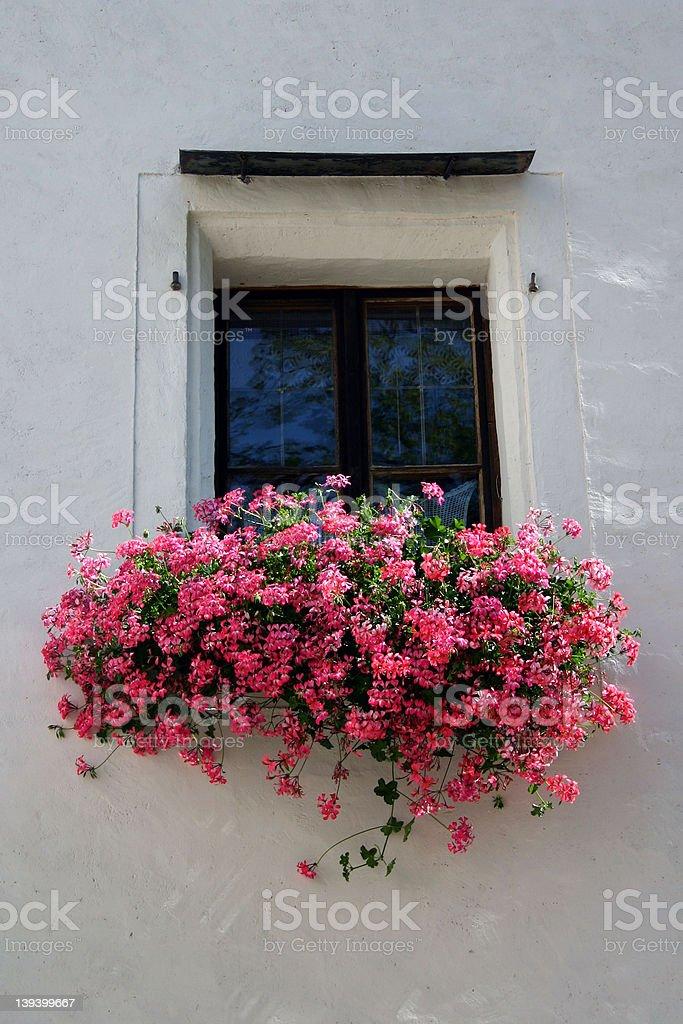 Ventana con flores foto de stock libre de derechos