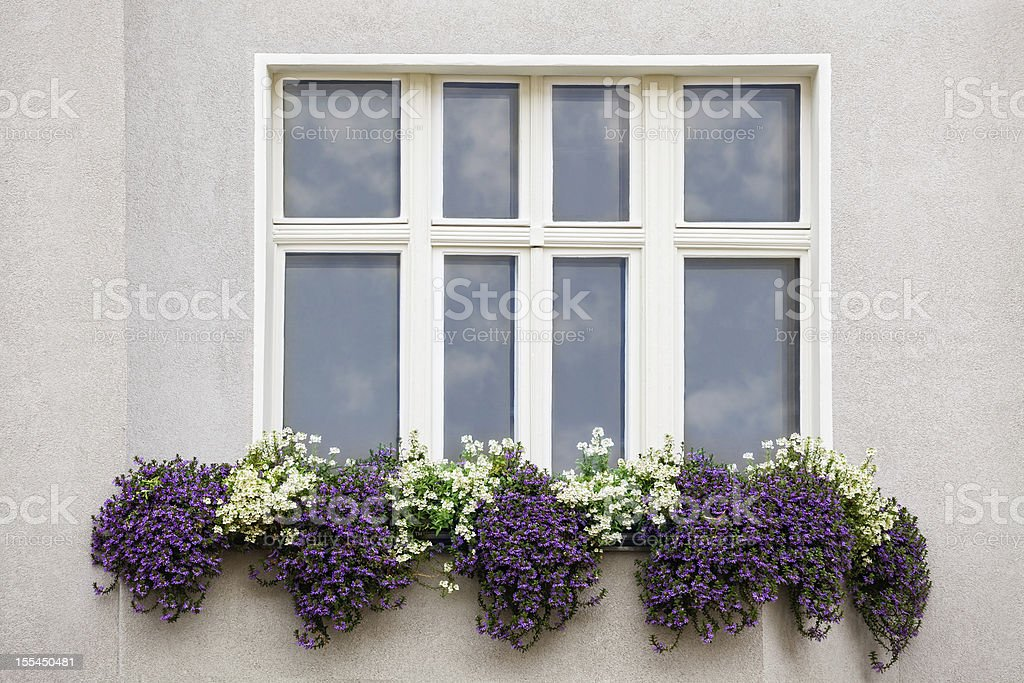 Window with flowers royalty-free stock photo