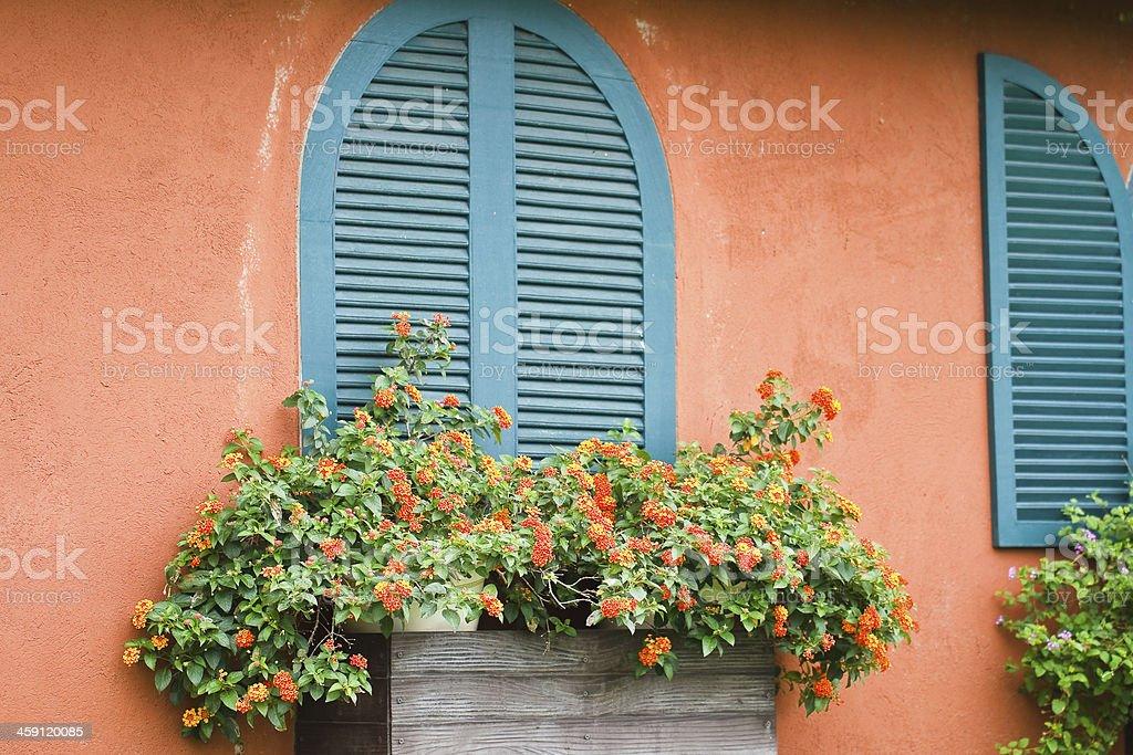Window with flowers. stock photo