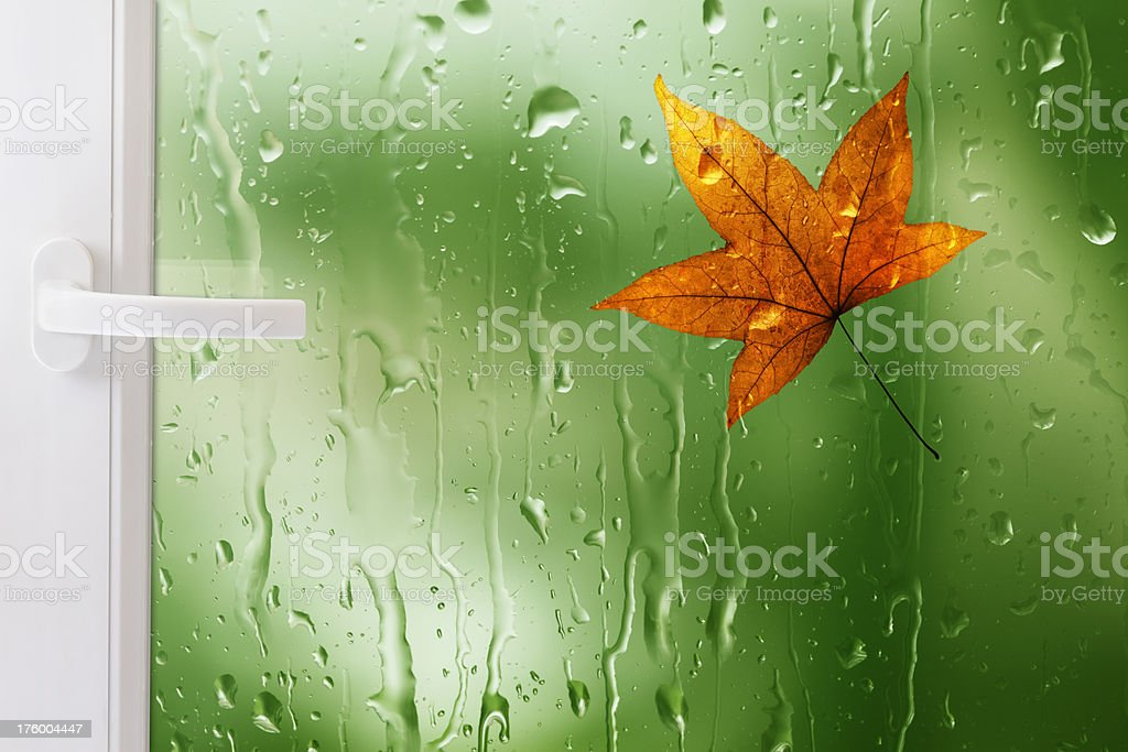 Window With Maple Leaf And Raindrops royalty-free stock photo