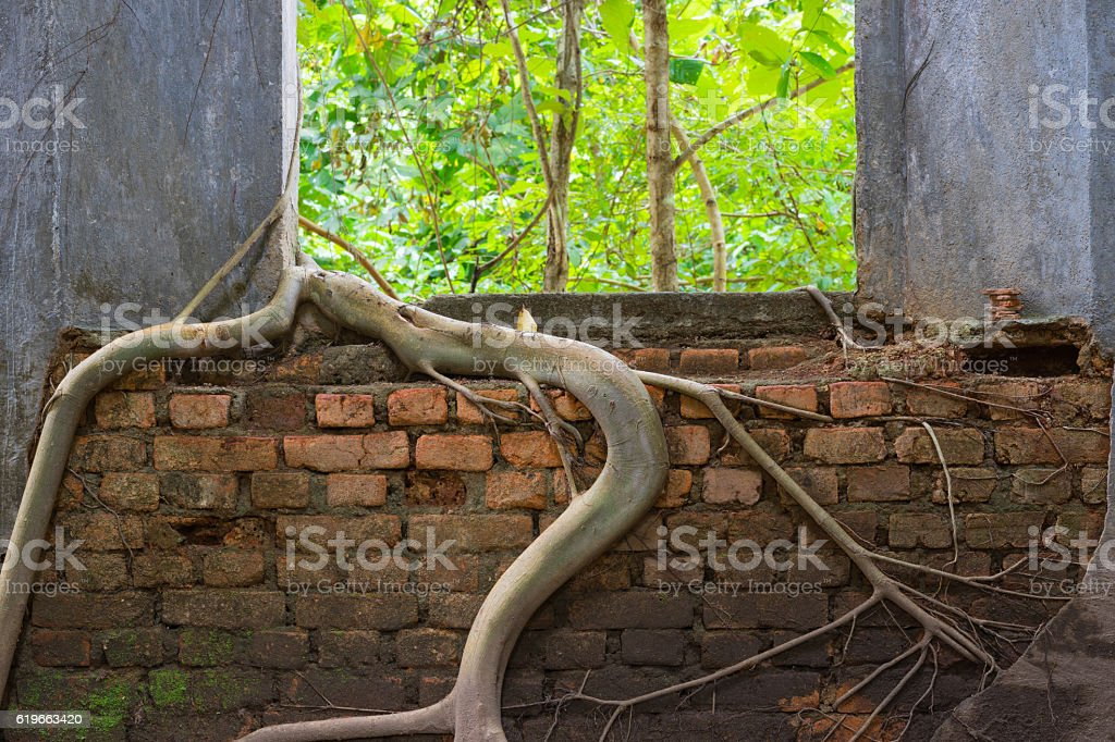 Window with roots of trees grip inwards stock photo