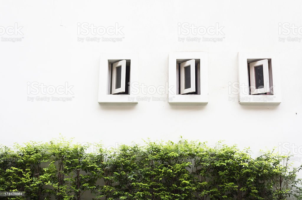 Окна с shattered. и зеленый филиал Стоковые фото Стоковая фотография