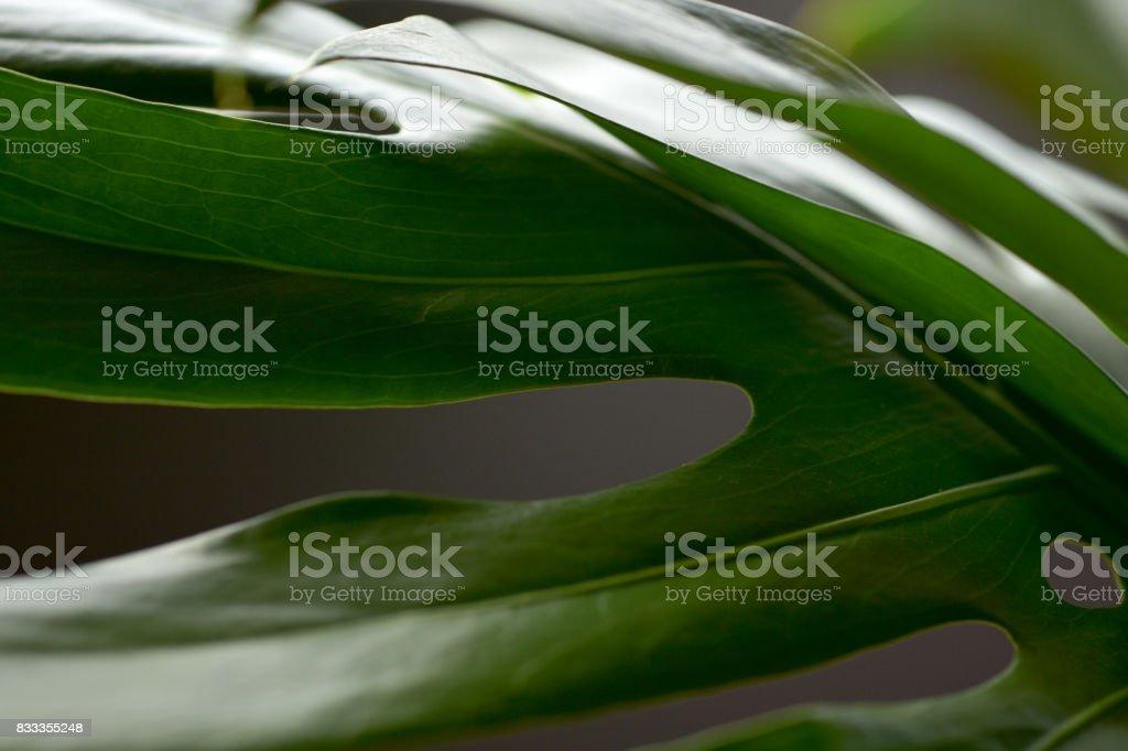 windowleef stock photo