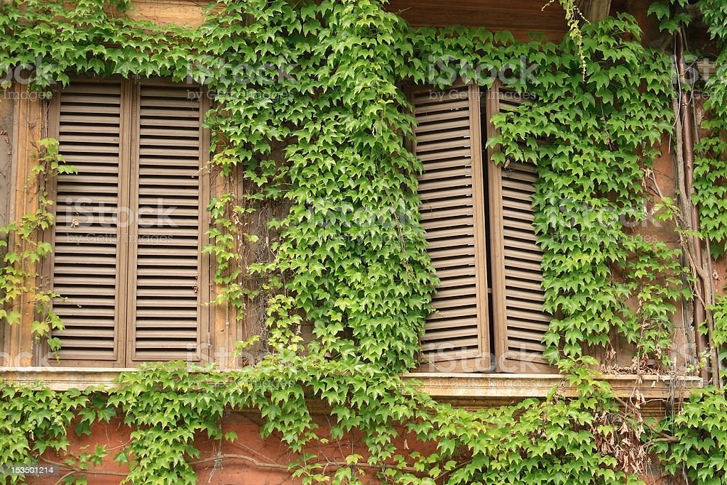 Windows and ivy royalty-free stock photo