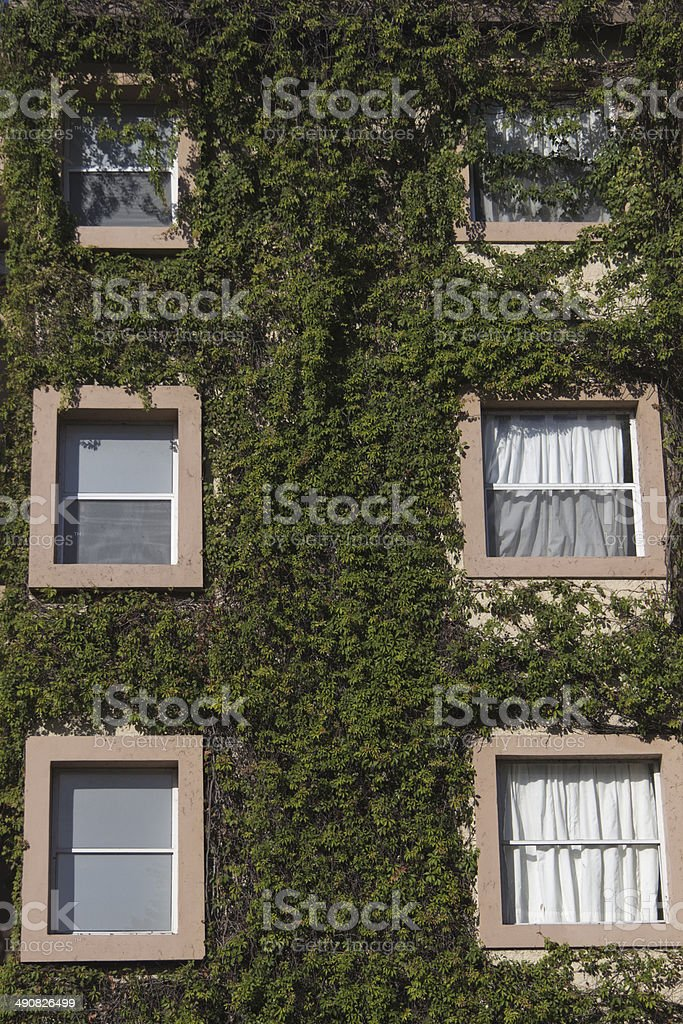 Windows surrounded by plants royalty-free stock photo