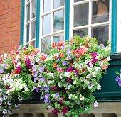 Windows with Flowers in Dublin, Ireland