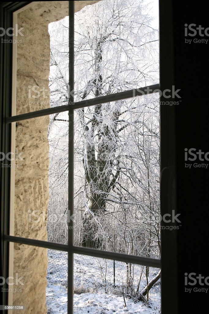 windows with winter view of snowy tilia trees. stock photo