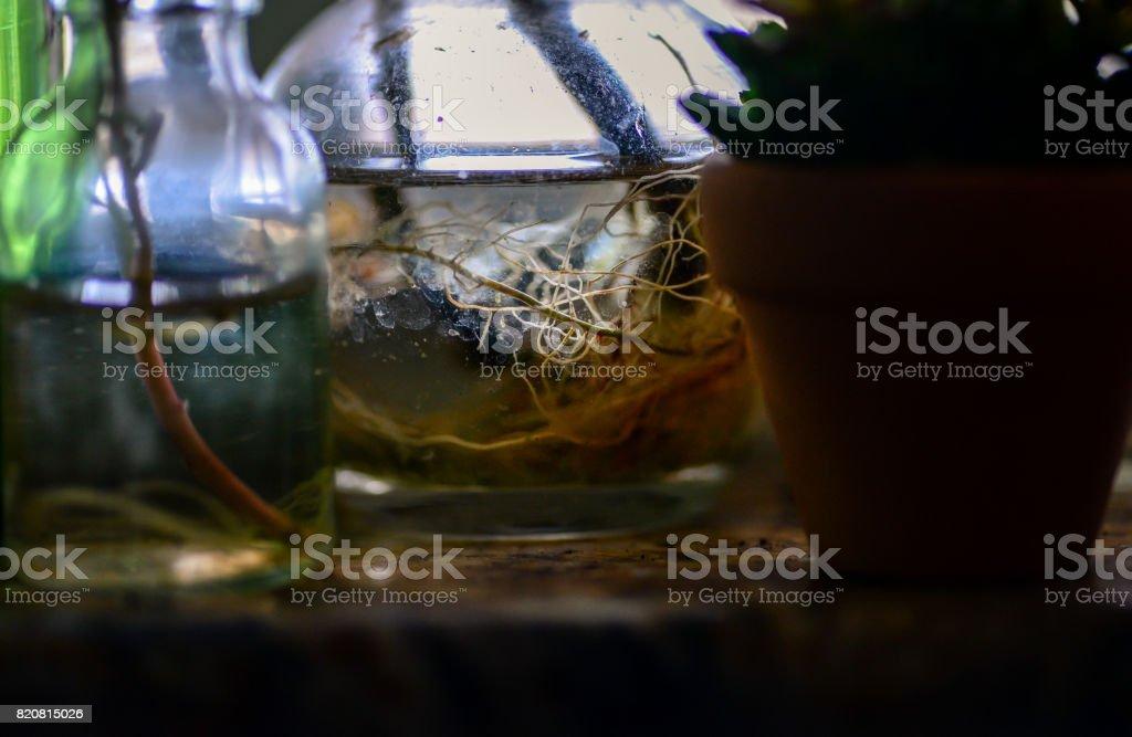 Windowsill Garden stock photo