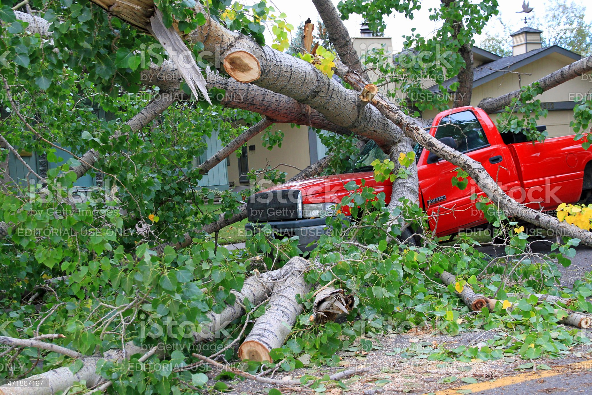 Windstorm causes Tree to fall on a Truck royalty-free stock photo