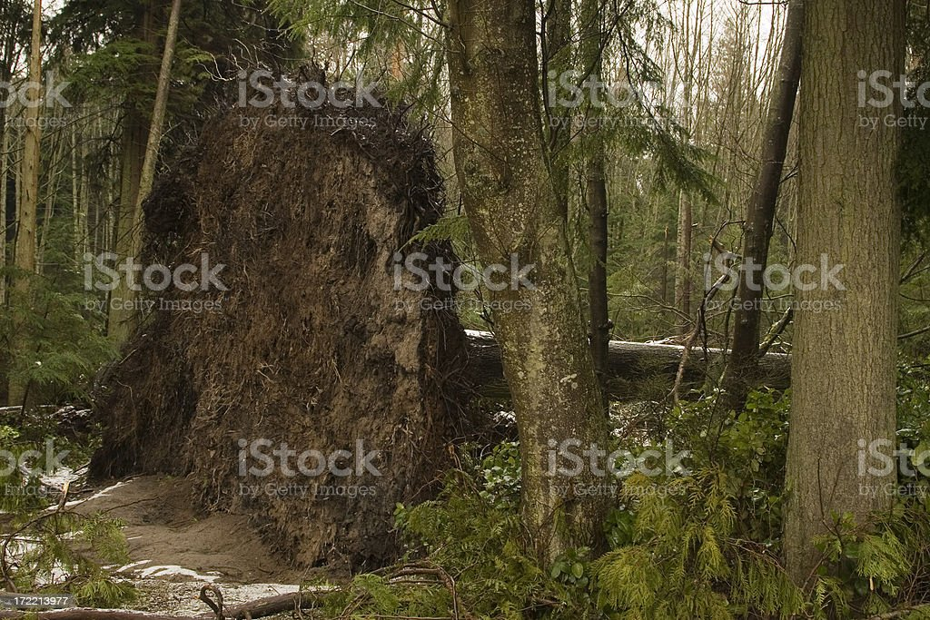 Windstorm Damage royalty-free stock photo