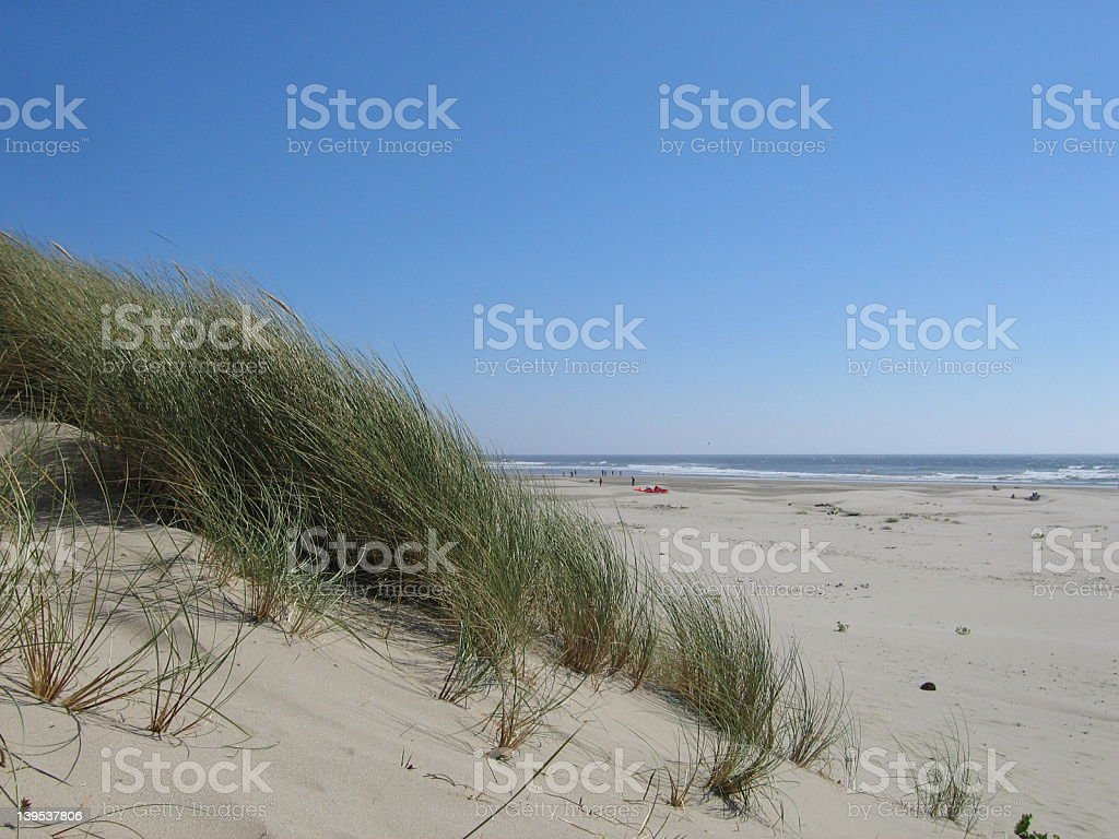 Windswept beach grass royalty-free stock photo