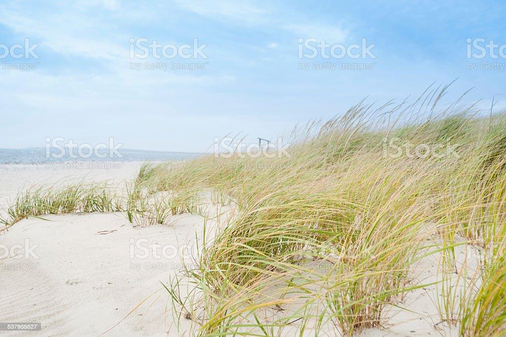 Windswept beach, typical Cape Cod coastal environment. stock photo