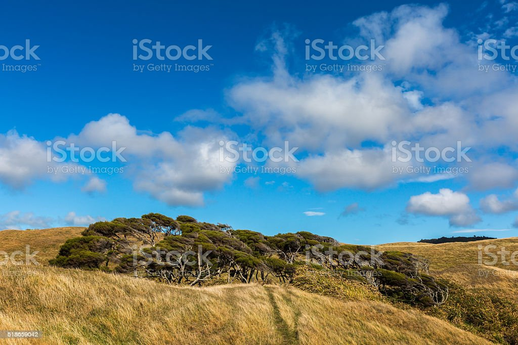 windswept tree and cloudy blue sky background stock photo