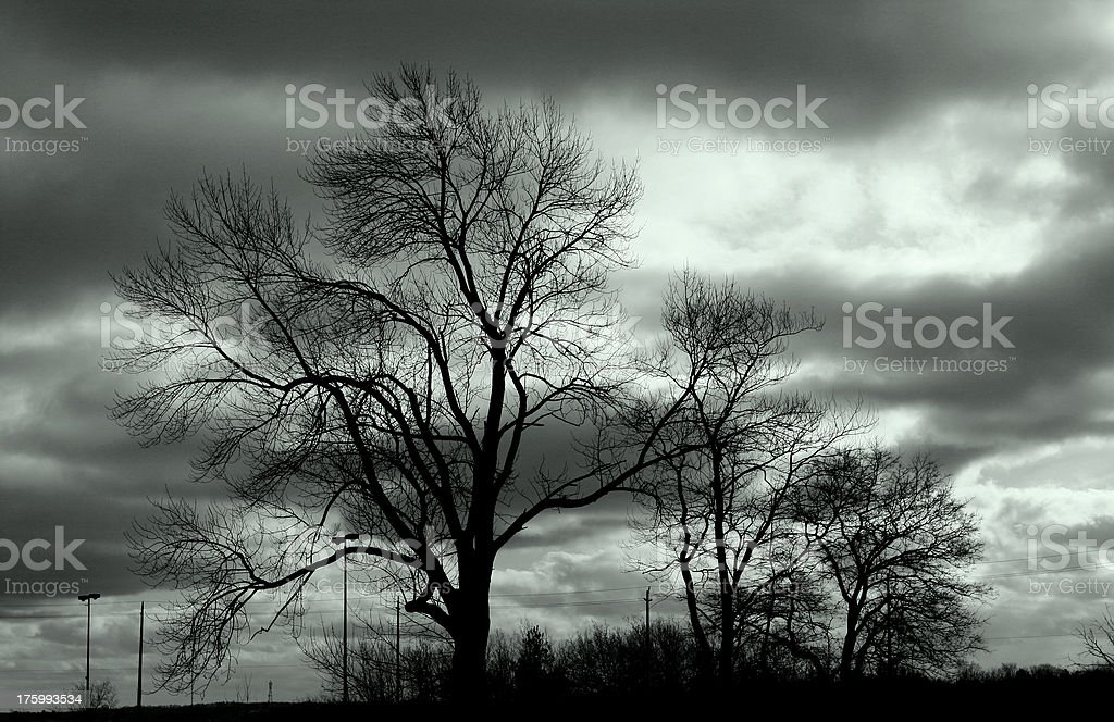 windswept trees in winter royalty-free stock photo