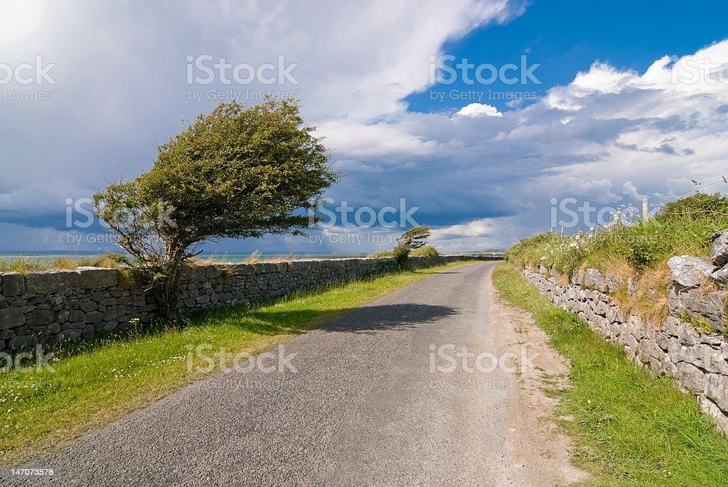 Windswept Trees stock photo