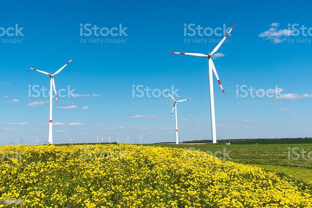 Windwheels and yellow flowers stock photo