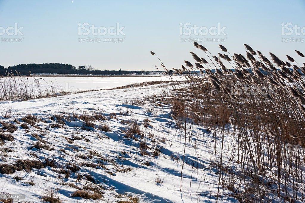 Windy day on Great Marsh stock photo