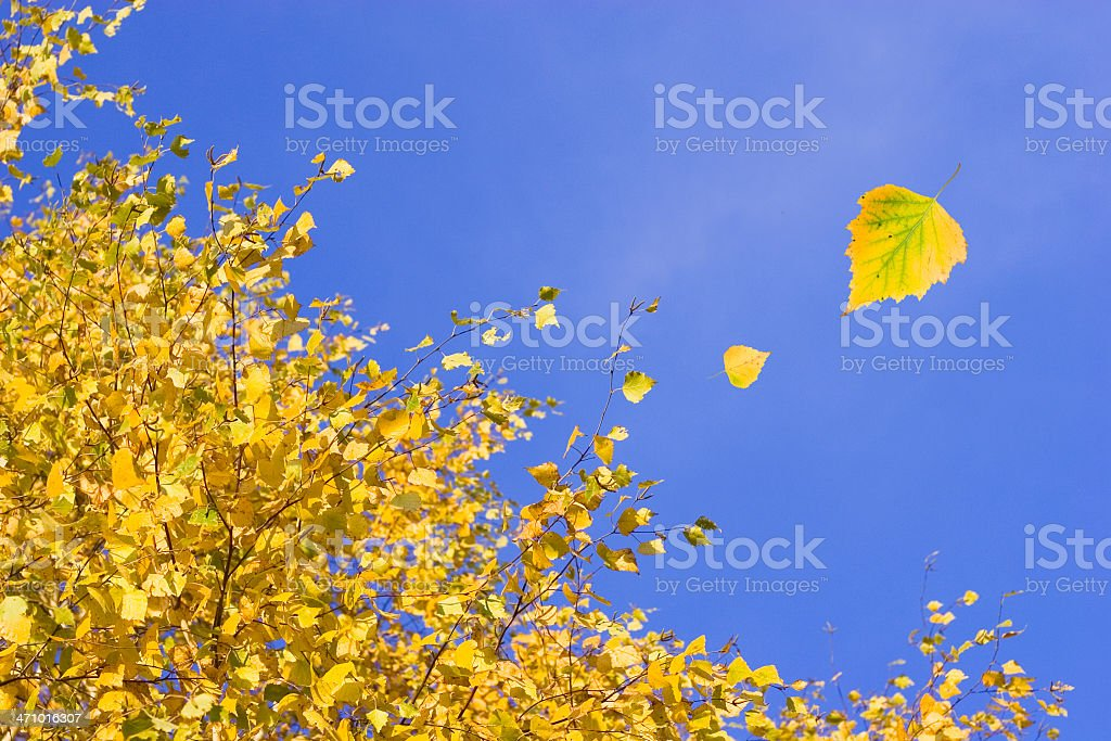 Windy day royalty-free stock photo