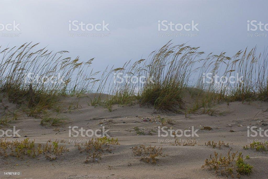 Windy Dunes stock photo