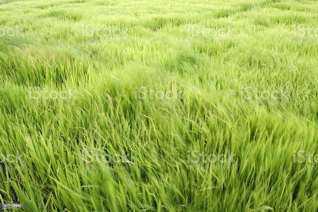 Windy field stock photo