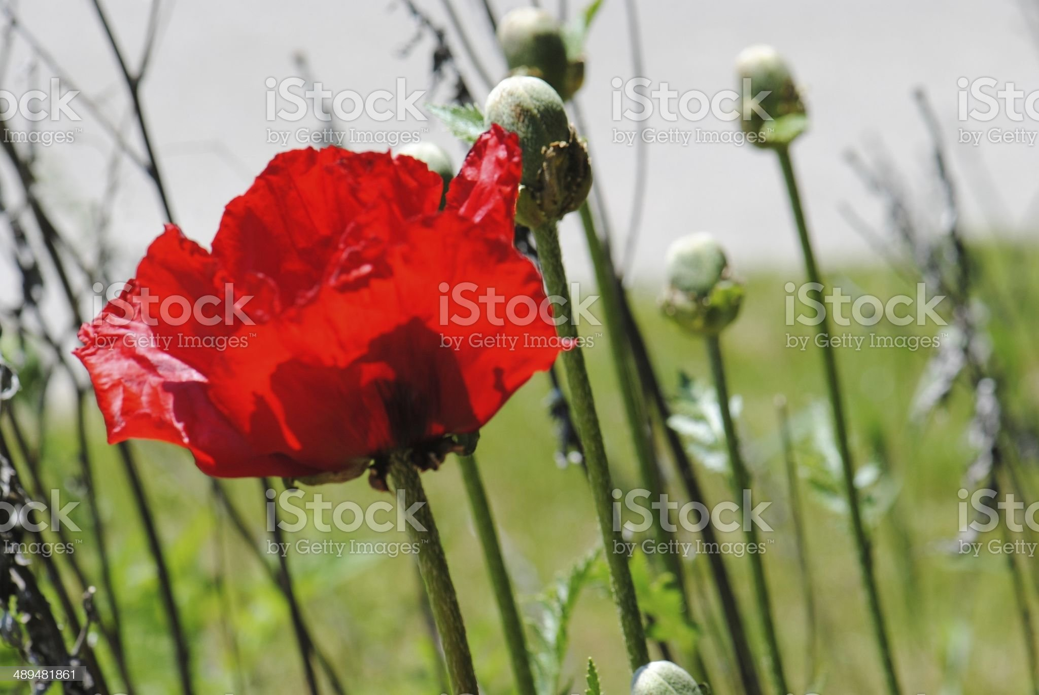 Windy Meadow royalty-free stock photo