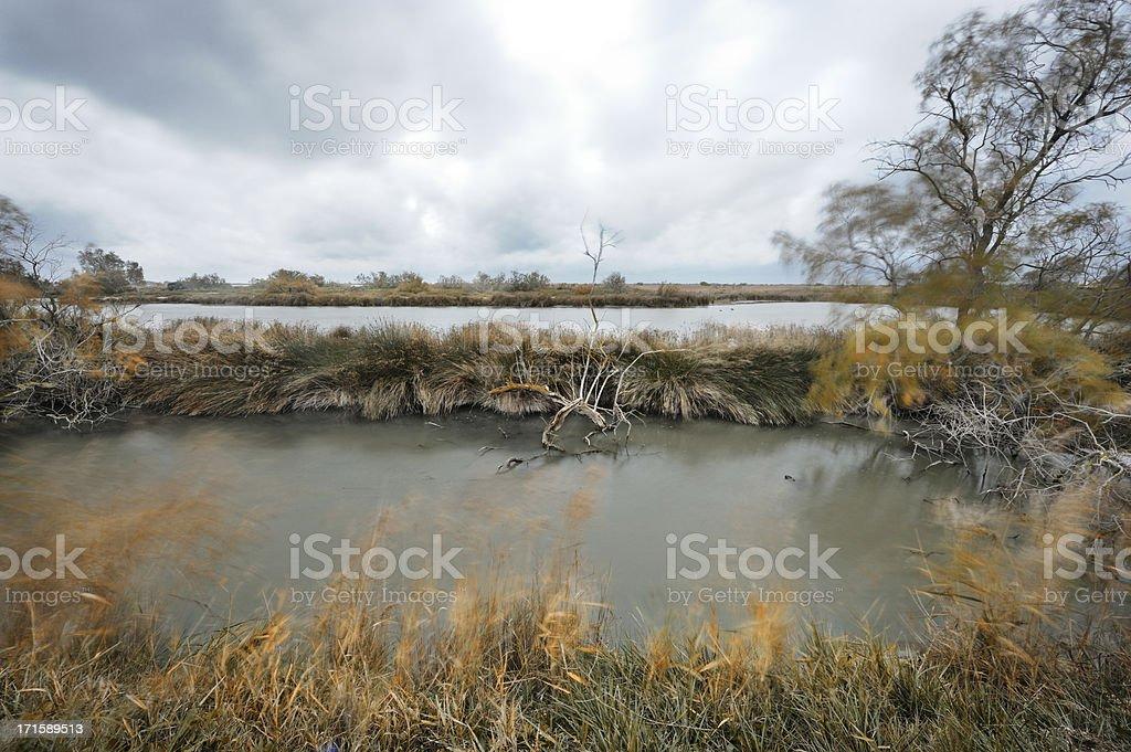 Windy morning on Camargue marsh stock photo