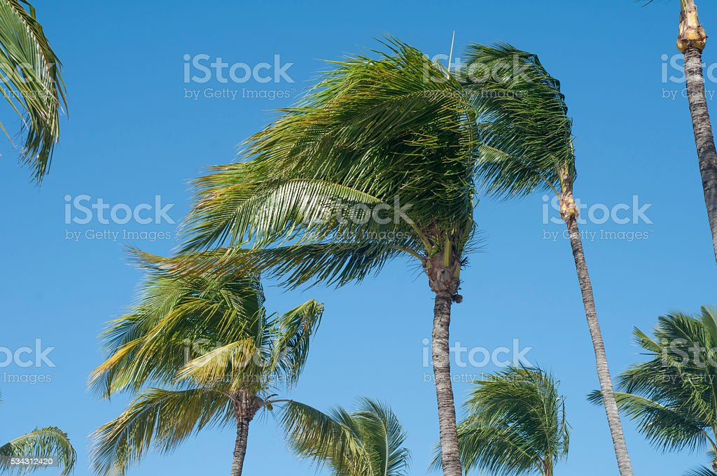 Windy Palms in Aruba stock photo