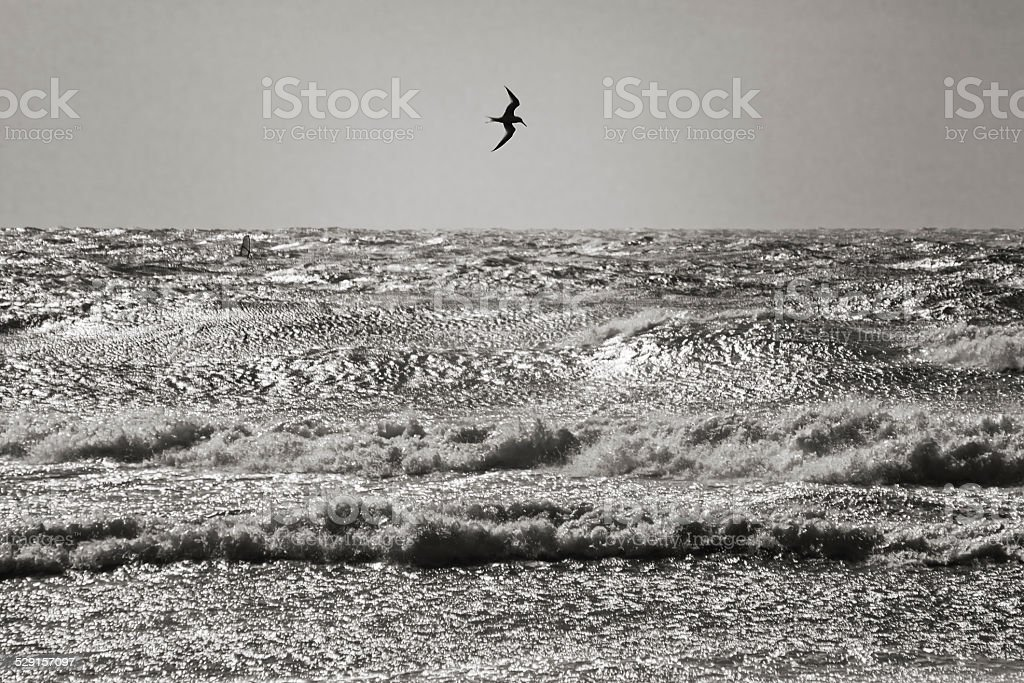 Windy seascape and a silhouetted tern. stock photo