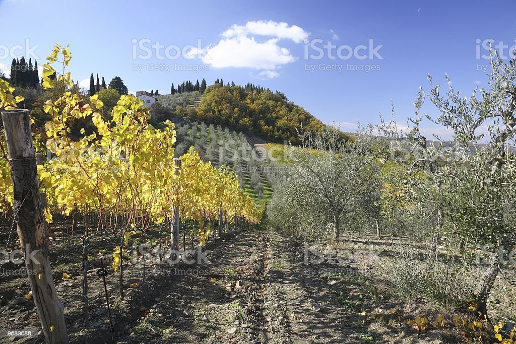 Wine and Olive in Radda Fall stock photo