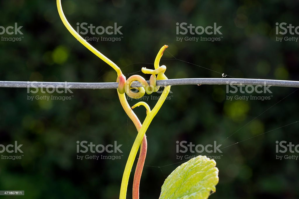 Wine and wire royalty-free stock photo