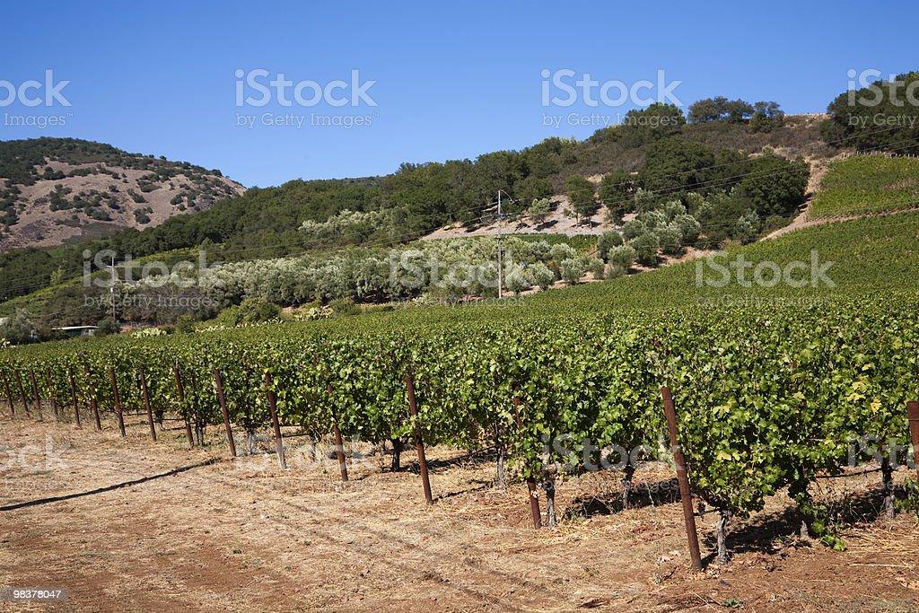 Wine Country stock photo