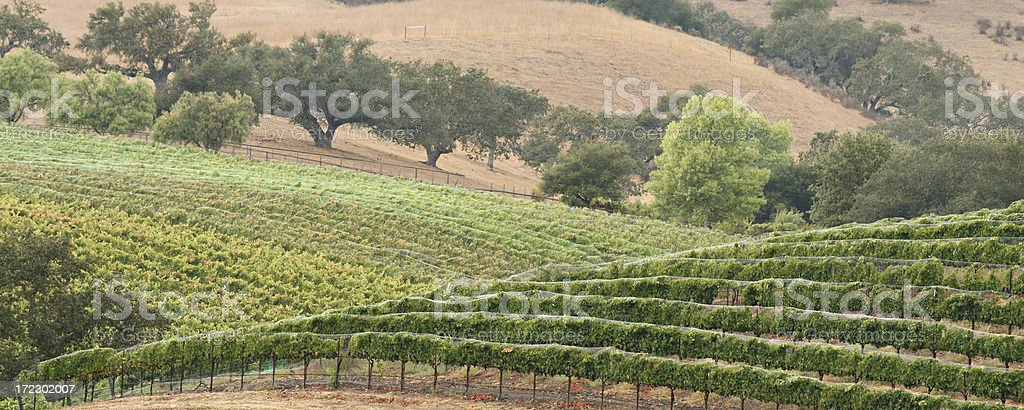 Wine Country Scenic royalty-free stock photo