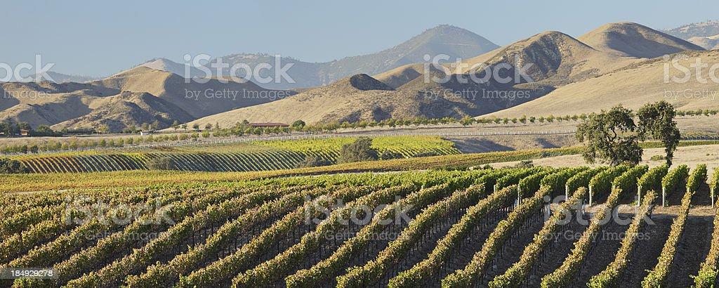 Wine Country Scenic stock photo