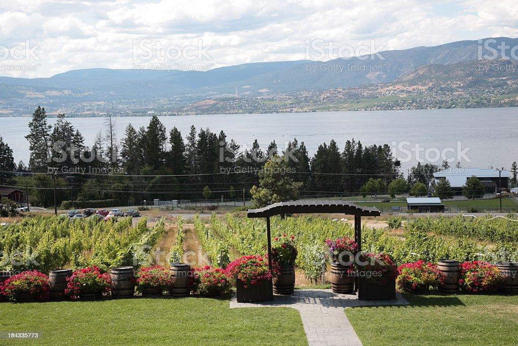 Wine Country Vineyards Along Okanagan lake royalty-free stock photo