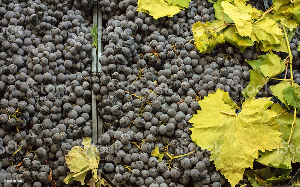 Wine grapes and leaves on sale in a market stock photo