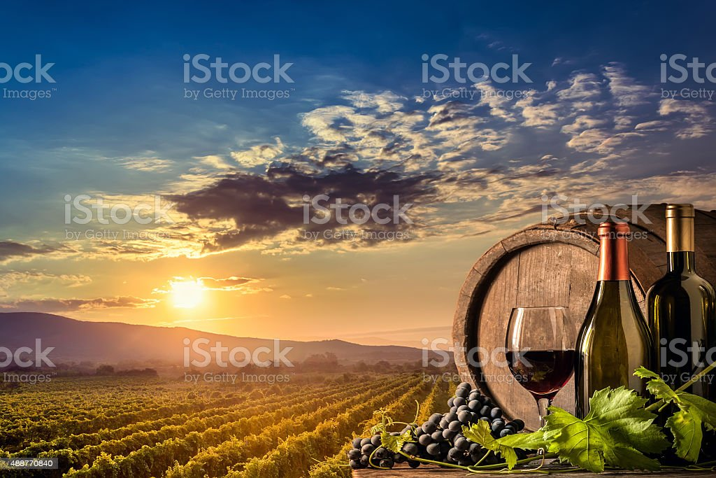Wine, grapes and sunset vineyard stock photo