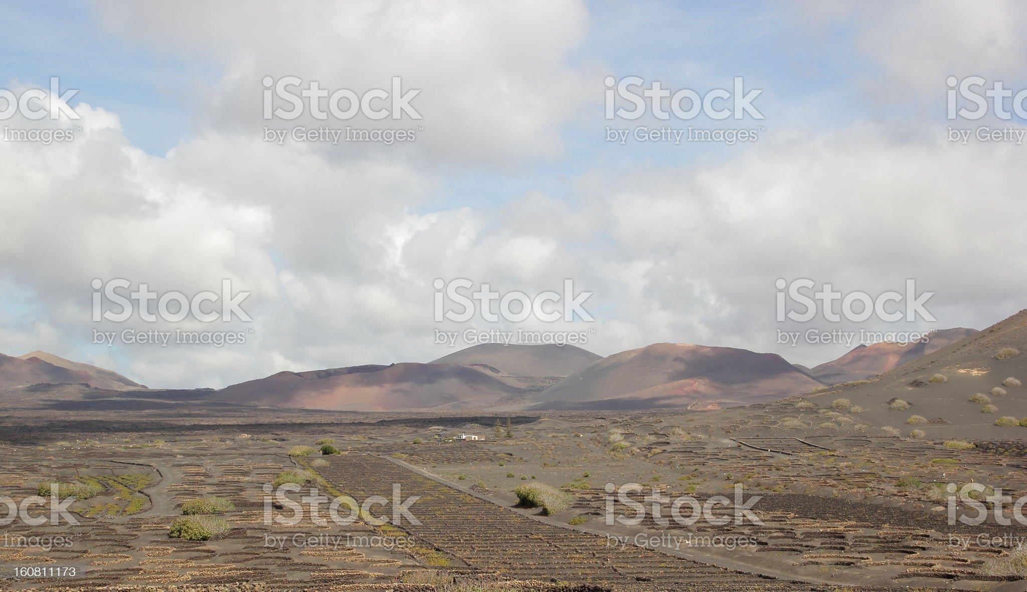 Wine growing on Lanzarote royalty-free stock photo