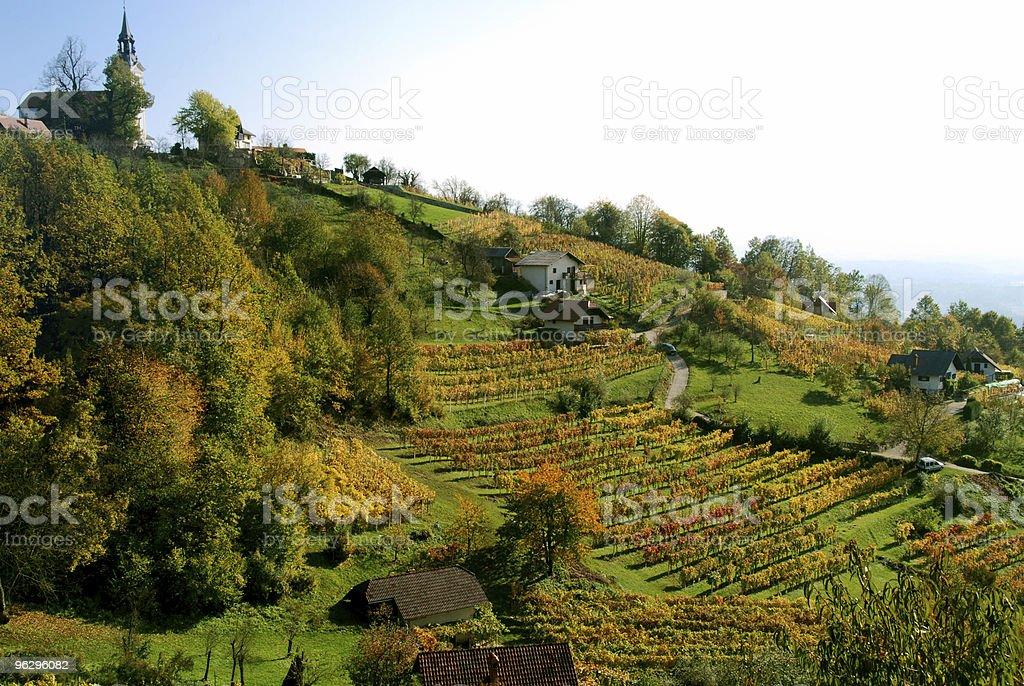 Wine road stock photo