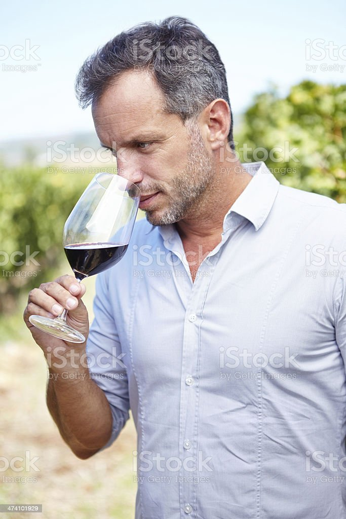 Wine tasting starts with a scent royalty-free stock photo