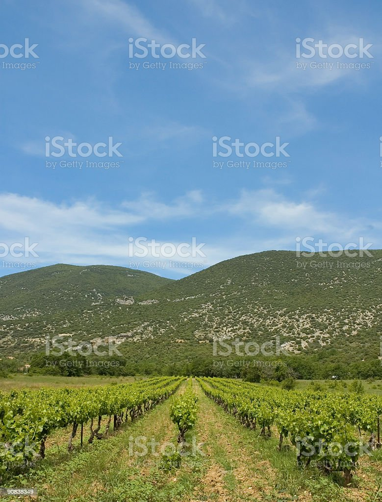 Wine time stock photo