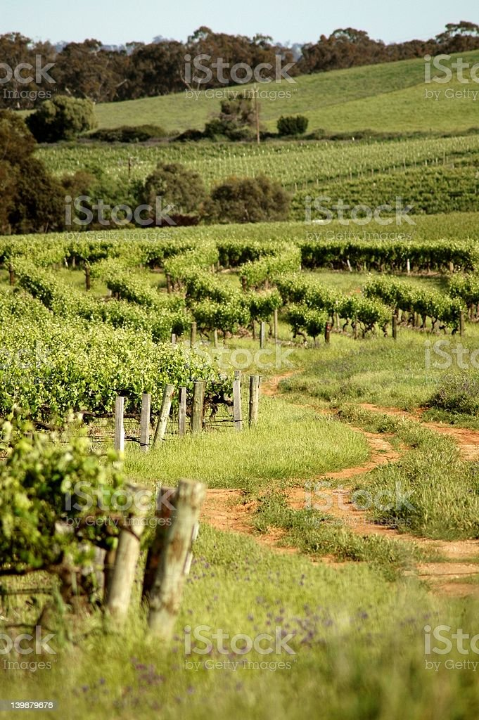 Wine Trail stock photo