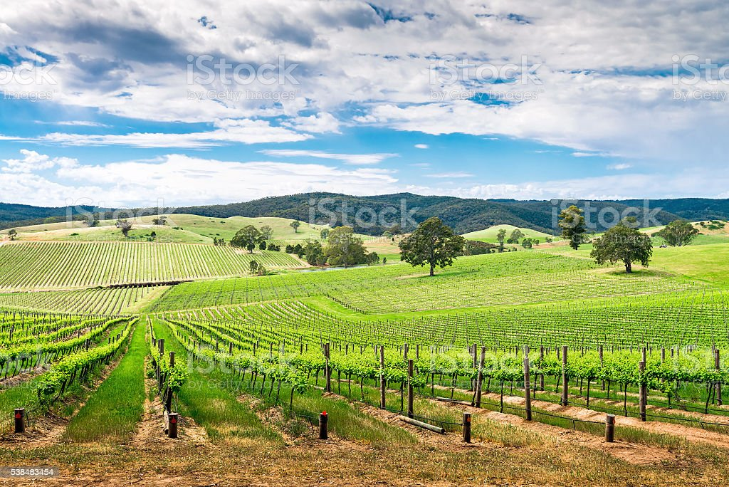 Wine valley in Barossa stock photo