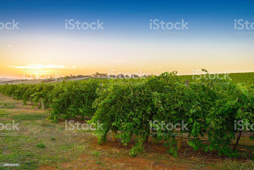 Wine valley stock photo