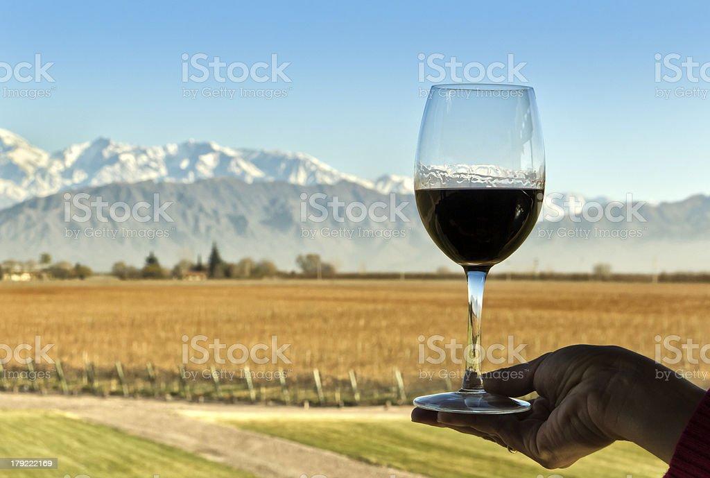 Wine, vineyard and mountain royalty-free stock photo