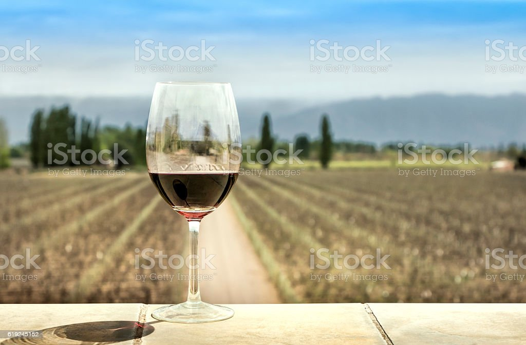 Wine, vineyard and mountain stock photo