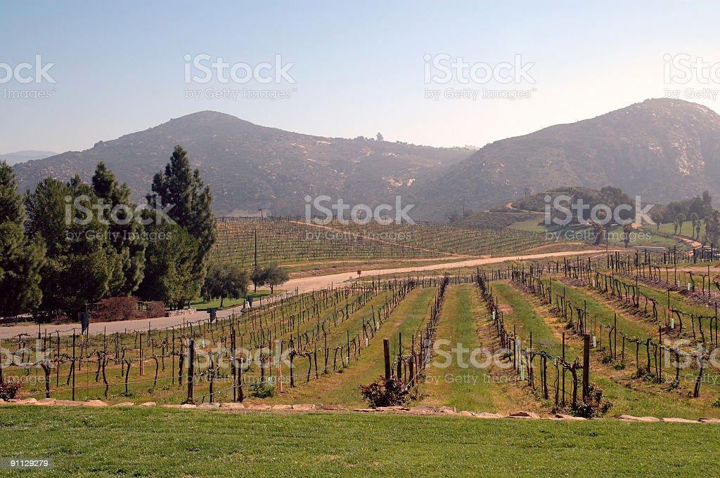 Wine Vineyard stock photo